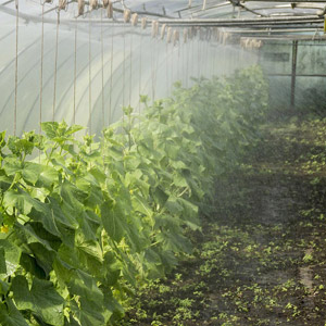 سیستم آبیاری بارانی گلخانه ها