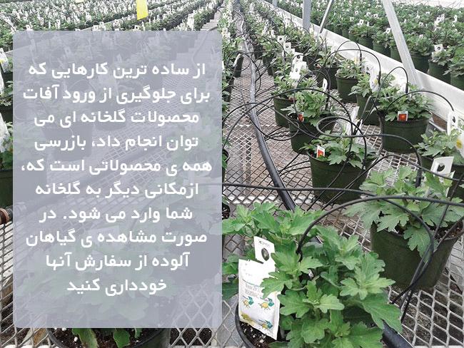 تشخیص و مدیریت آفات و بیماریهای محصولات گلخانه ای ، بیماری های گلخانه ای ، بیماری های گیاهان گلخانه ، آفات مهم گلخانه ای ، آفات محصولات گلخانه ای ، جلوگیری از ورود آفات محصولات گلخانه ای