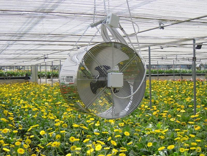 فن سیرکوله در گلخانه با گلهای زرد