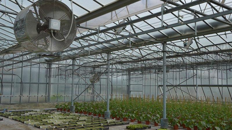 فن سیرکوله گلخانه نصب شده در سقف گلخانه