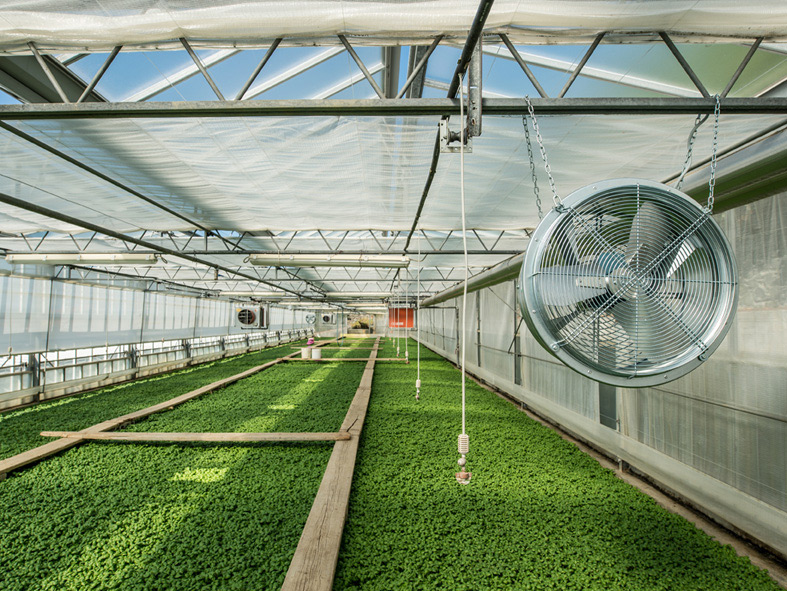 استفاده از فن گلخانه برای تهویه محیط گلخانه های بزرگ