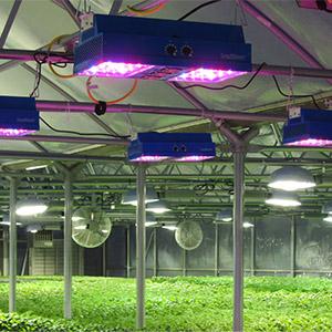 سیستم برق و روشنایی گلخانه ، سیستم روشنایی گلخانه ، تابلو برق گلخانه ، سیستم برق کشی گلخانه