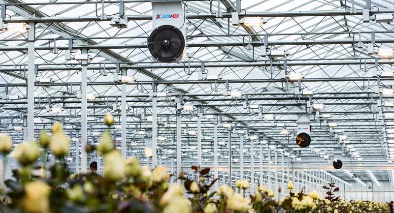 چیدمان فن سیرکوله گلخانه در بالا