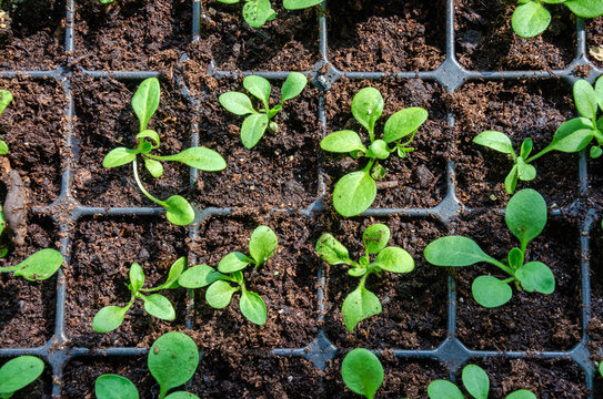 کاشت گیاه در سینی نشاء و نکات مهم در مورد قیمت آن