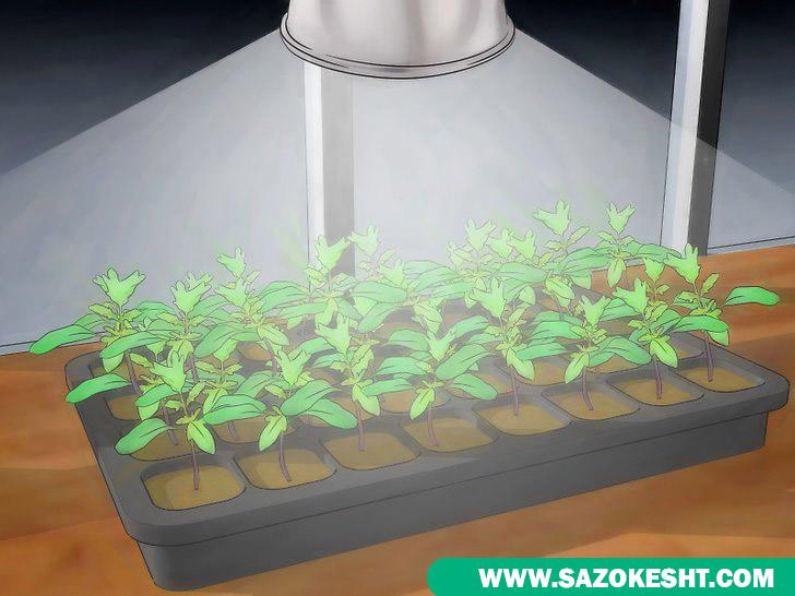نور مصنوعی جهت رشد گیاه گوجه فرنگی