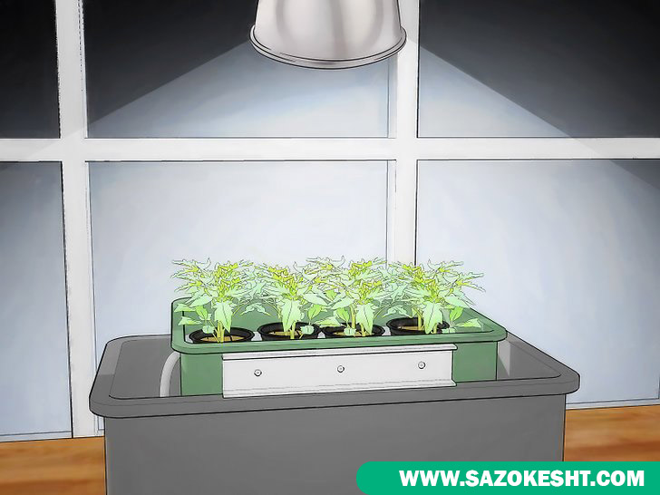 نور دهی در کشت هیدروپونیک گوجه فرنگی