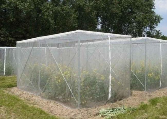 پیشگیری از ورود حشرات با توری ضد حشره گلخانه