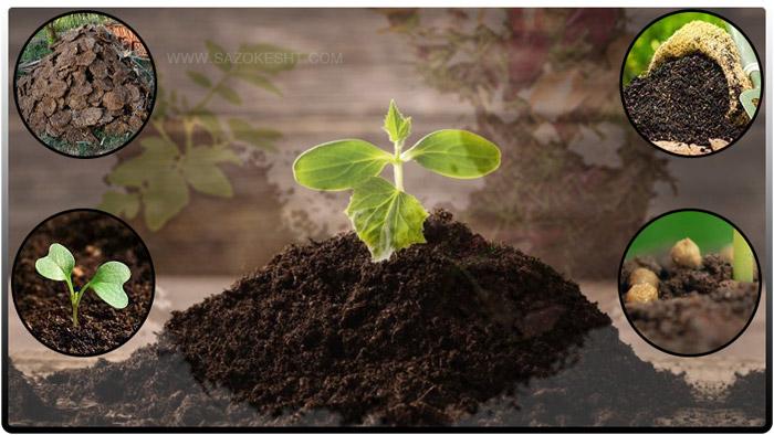 چه گیاهانی برای تهیه کود سبز مناسب هستند